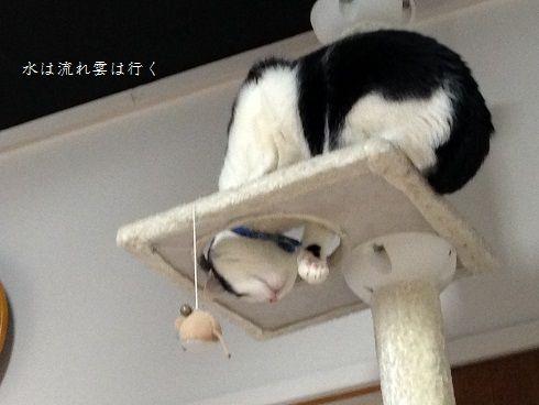 yamato818.jpg