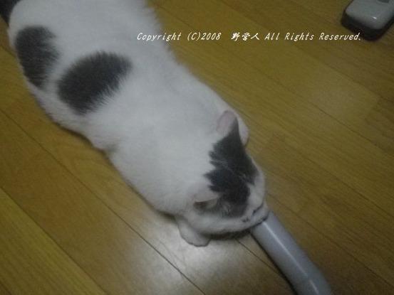 fukumaru260
