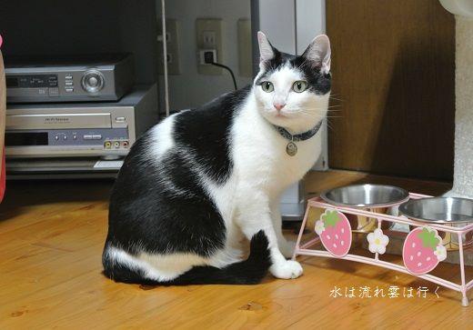 yamato876.jpg