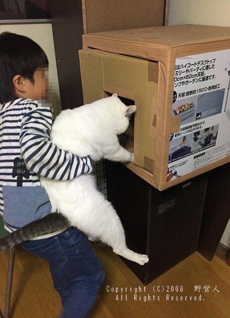 fukumaru248