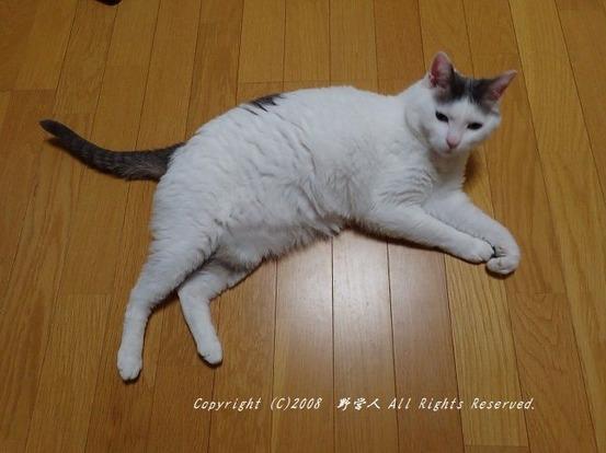 fokumaru261