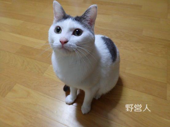 fukumaru16328