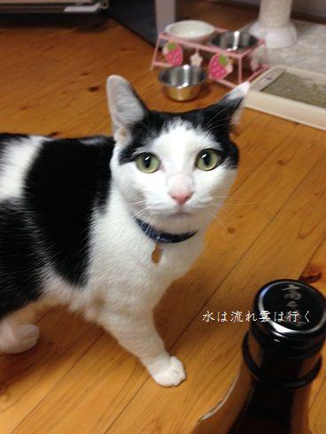 yamato772.jpg