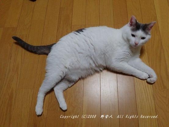 fukumaru261