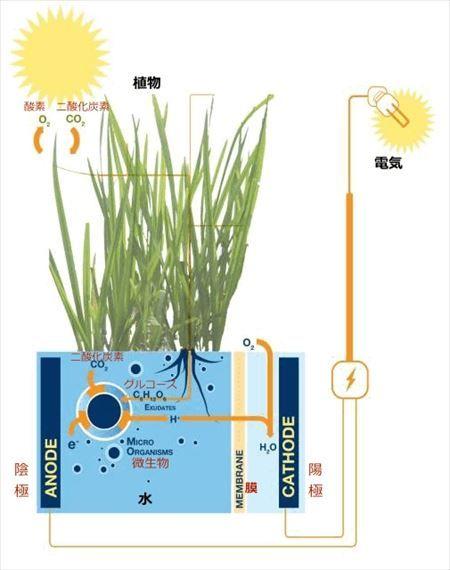 plant-e6_R