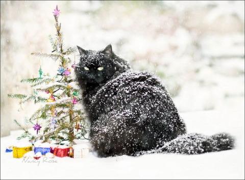 雪と遊ぶ猫20