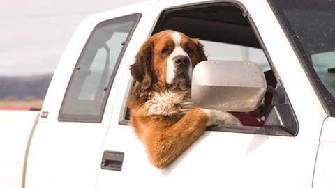 もしも可愛いペットの運転でドライブに出かけたら!?