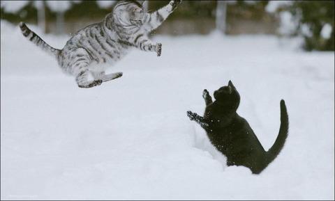 雪と遊ぶ猫21