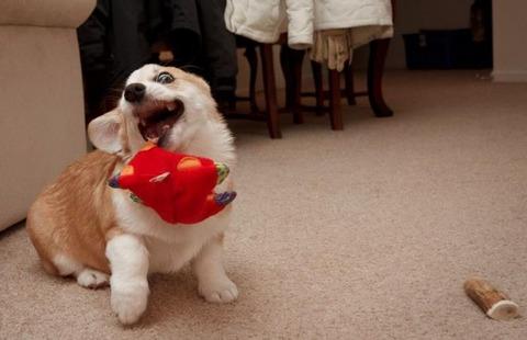 ヘン顔をする犬 (6)