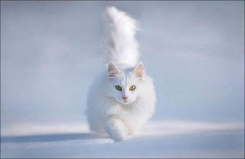 雪と遊ぶ猫25