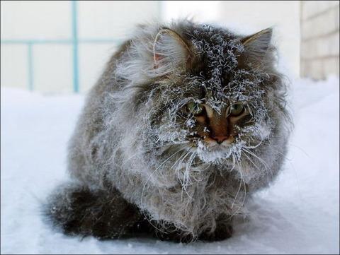 雪と遊ぶ猫29