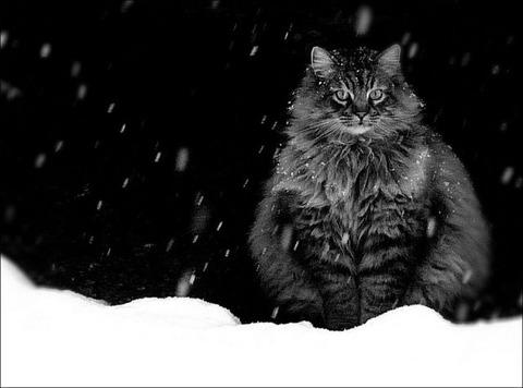 雪と遊ぶ猫22