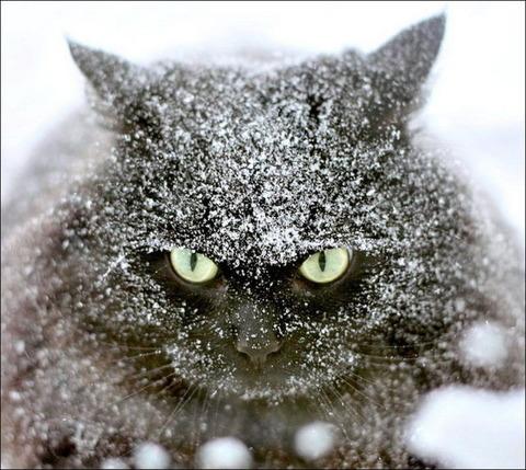 雪と遊ぶ猫3