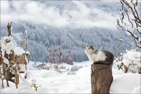 雪と遊ぶ猫18