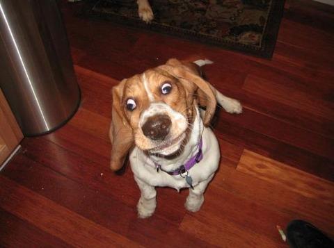 ヘン顔をする犬 (4)