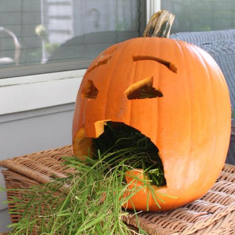 ハロウィンかぼちゃ (16)