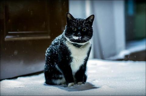 雪と遊ぶ猫24