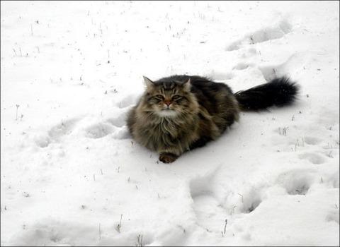 雪と遊ぶ猫16
