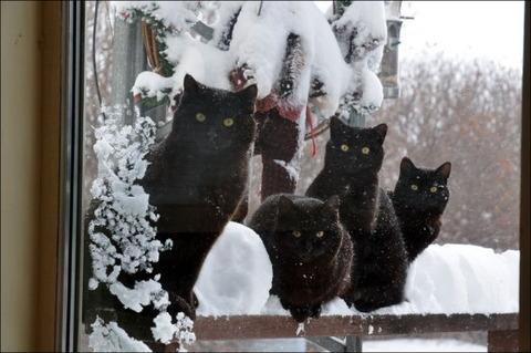 雪と遊ぶ猫23