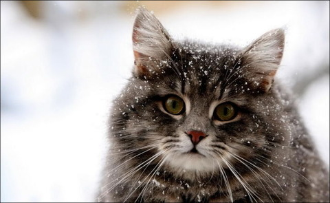 雪と遊ぶ猫13