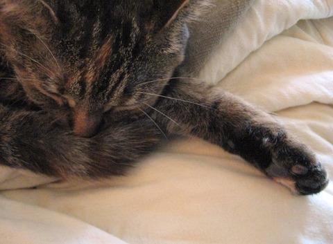 爆睡中のネコ (2)