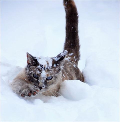 雪と遊ぶ猫19