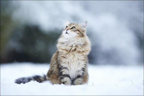 雪と遊ぶ猫7