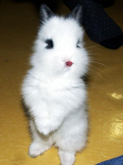 アッカンべーなウサギ (8)