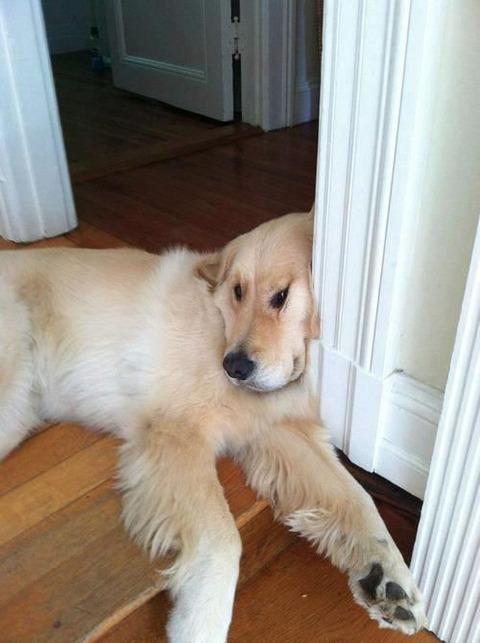 ヘン顔をする犬 (5)