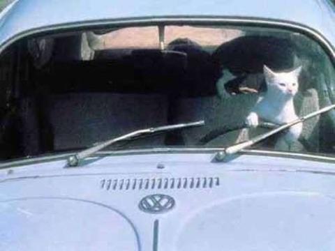 ペットが運転 (9)