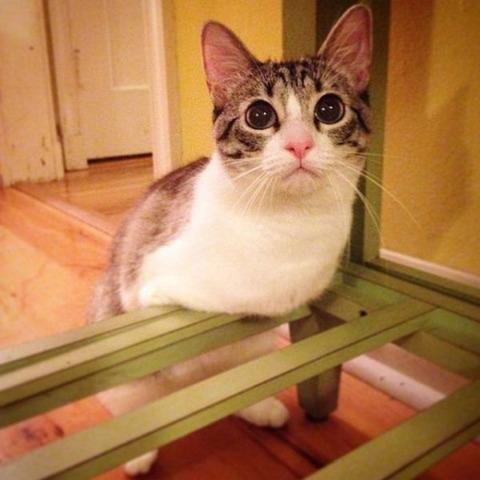 まっすぐな瞳におもわず泣けてくるネコちゃん