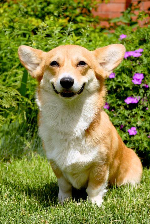 笑う犬 (1)