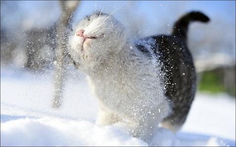 雪と遊ぶ猫27