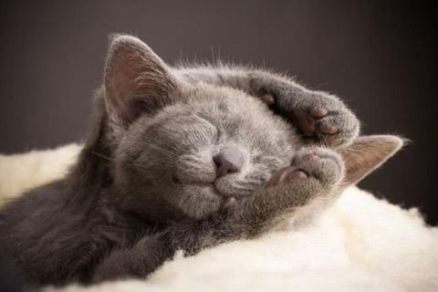 可愛すぎる子猫 (11)