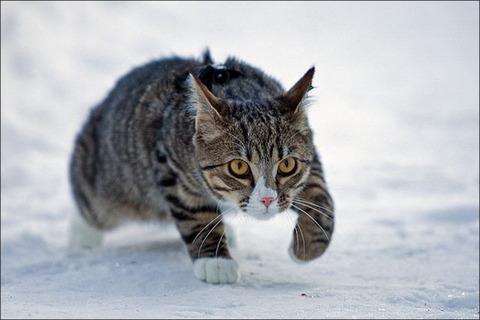 雪と遊ぶ猫17