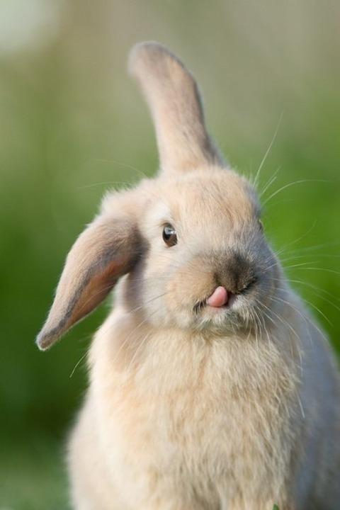 アッカンベーをするウサギがたまらなくカワイすぎる!!