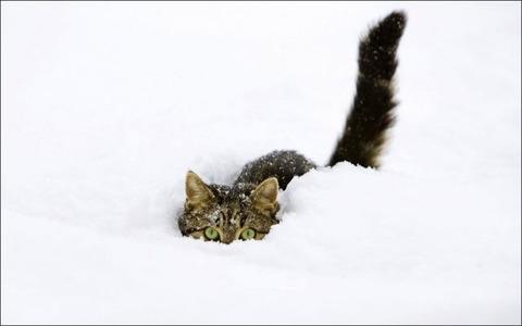 雪と遊ぶ猫26
