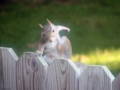 俺ってイケてる!?かっこよく決めポーズをする動物たち