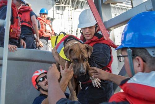 太平洋で漂流5か月、米国人女性2人と愛犬2匹を救助2
