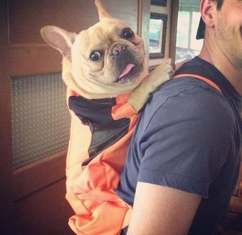 NY地下鉄「バッグに入らない動物の持ち込み禁止!」3