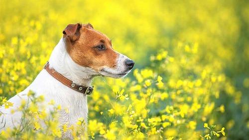 春の訪れを感じるような犬+花の画像10