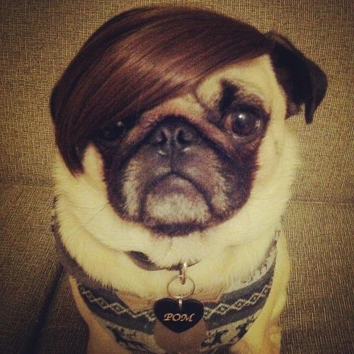 これより第一回美犬コンテストを開催します17