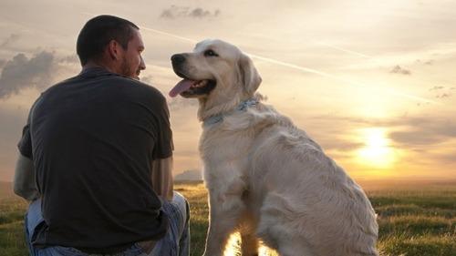 飼い主と犬は「親子の絆」