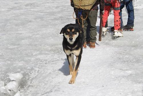 登山隊に付いてきた野良犬さん、バルンツェ登頂に成功3