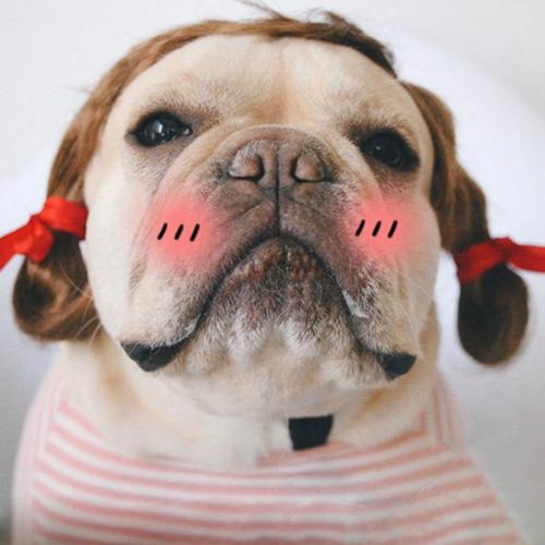 これより第一回美犬コンテストを開催します15