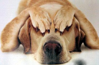 普段の犬「オラオラエサおせーぞwwwwww」
