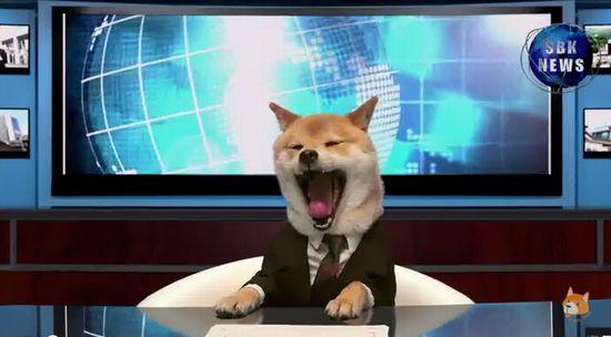 柴犬の犬山柴男キャスターが可愛すぎる2
