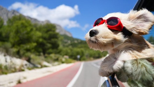 今日からGW休み突入!やったー!と思ったのに天気が悪いから車の窓から顔を出して風と戯れる犬画像でも見てスカッと爽快な気分になろうぜ