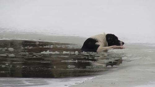 池に落ちた犬を助けようとしたハゲ