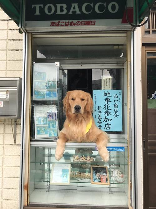 犬さん、タバコ屋に就職する
